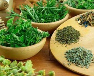 plantas-medicinais-para-emagrecer