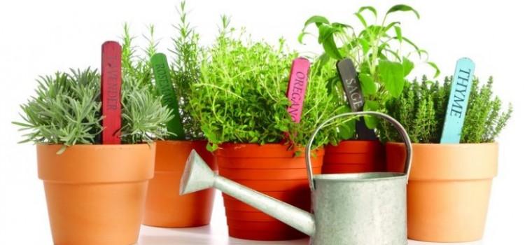 truques-ervas-aromaticas