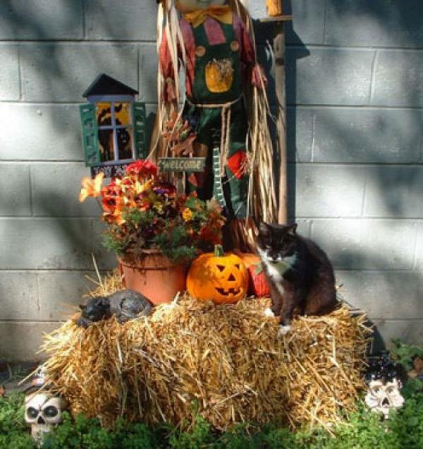 Decor-for-Halloween-15
