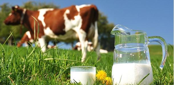 a-verdade-do-leite