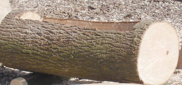hollowed-log-planter-5