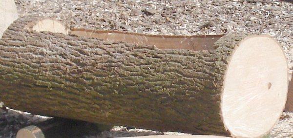 hollowed-log-planter-5