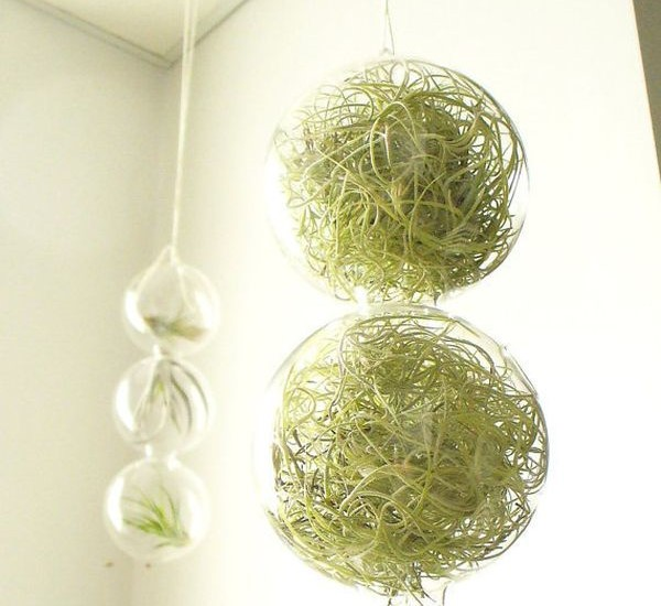 globos-vidro-plantas-fantasticas