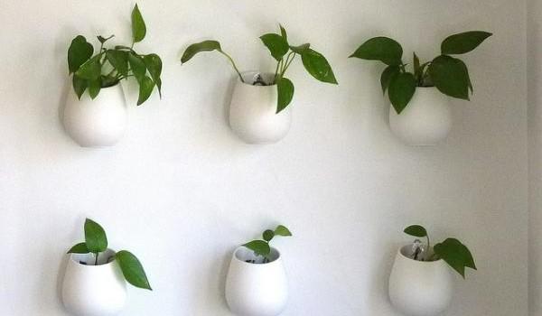 plantas-parede-interiores