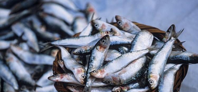 consumo-peixes-azuis-omega3