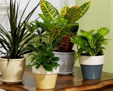 Cultivar flores em casa com sucesso