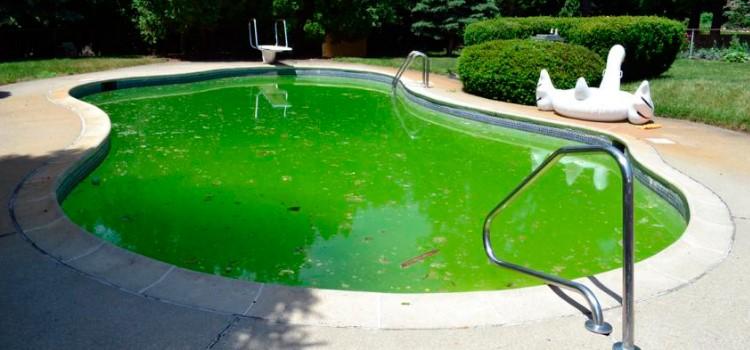 Tratamento de Piscina com algas